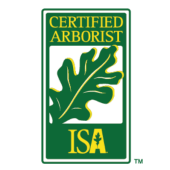 Certified Arborist in Waco